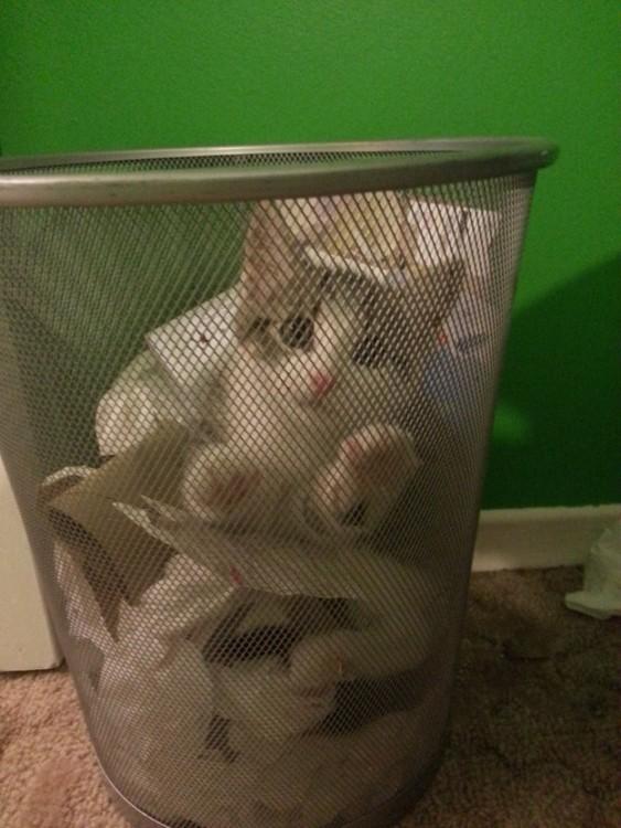 gato asustado metido en el cesto de la basura escondido bajo los papeles