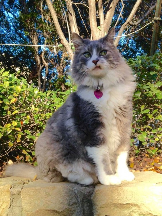 gato con cara de molesto por allguna situacion