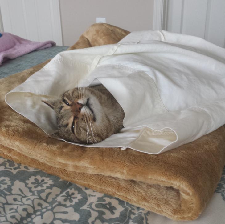 gato adormilado y tapado sobre un tapete