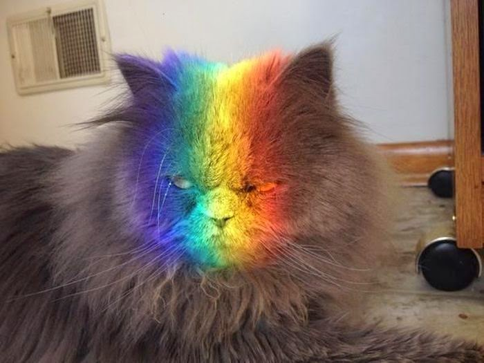 gato con la cara pintada de arcoiris parece enojado