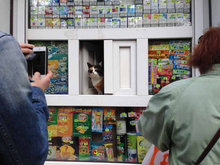 gato enojado en la estanteria de un super mercado al que no pueden sacar de su lugar