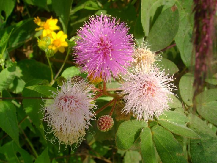flora silvestre de guatemala