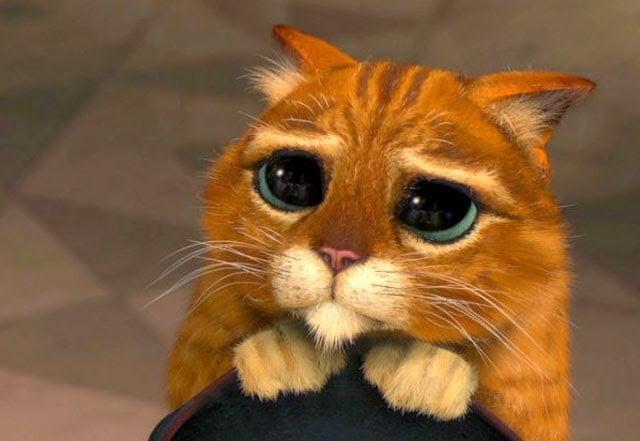 gato con botas pidiendo perdon