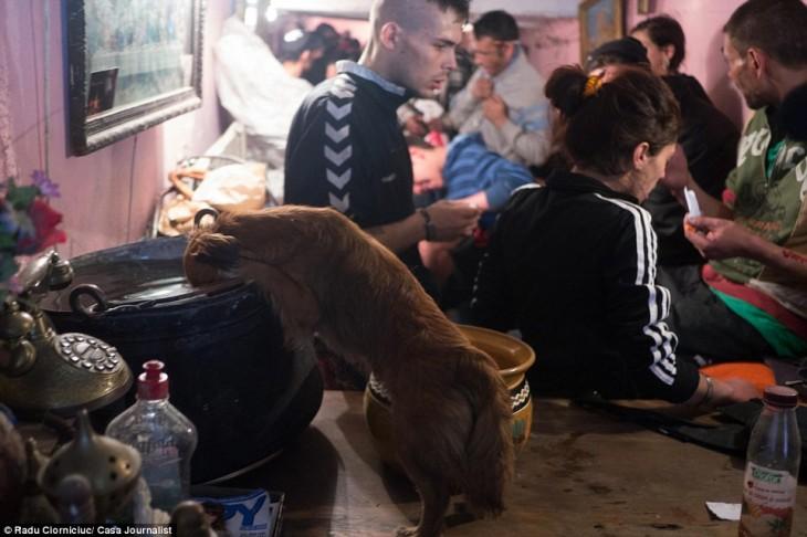 prro comiendo de la hoya de los que viven en los tuneles de rumania