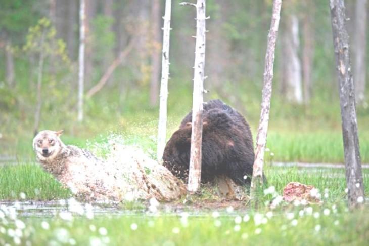lobna corre porque mordio al oso jugando mientras él comía
