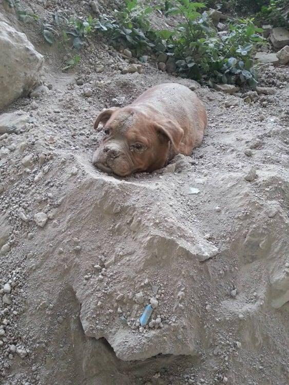 perrita que fue enterrada viva en francia