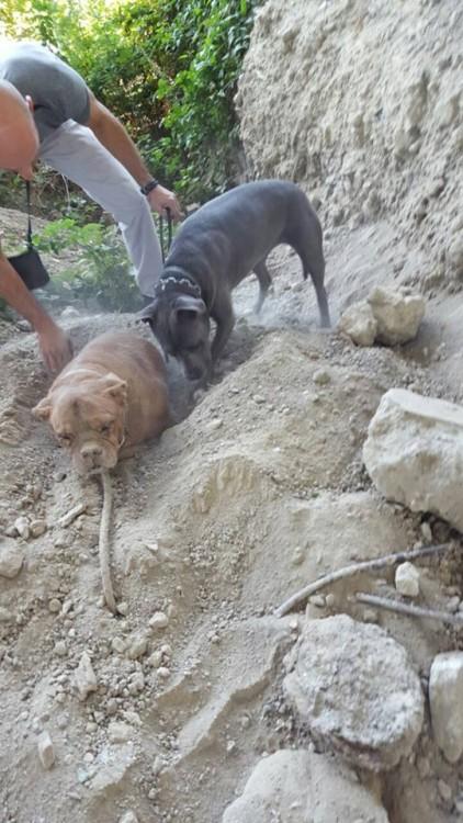 perro del que la encontro le ayuda a desenterrarla