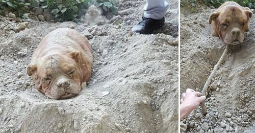 Una perrita fue enterrada viva y salvada