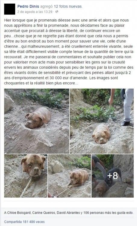 historia de la perrita en facebook