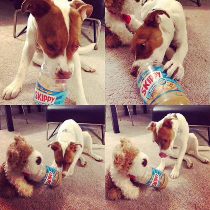 perro comiéndose el skipy completo