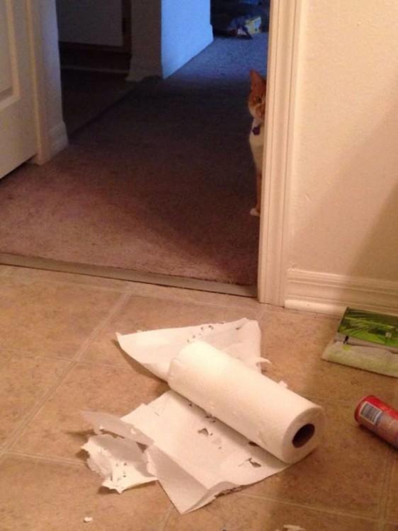gato escondido porque hizo travesuras con las toallas para la cocina