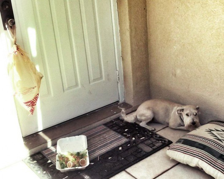 perro que rompio el plato de ensalada cuando llego al lugar