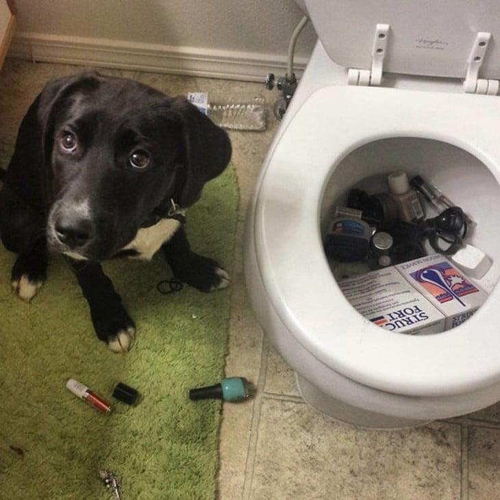 perro metio las pertenencias de su dueña en la taza del baño