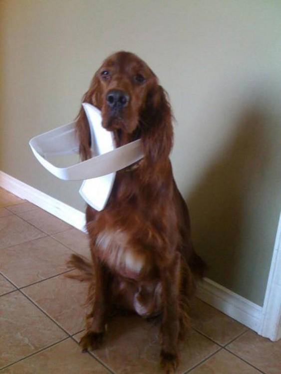 perro con la tapa de la cocina atorada en la cabeza