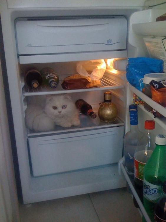 gato tuerto adentro del refrigerador