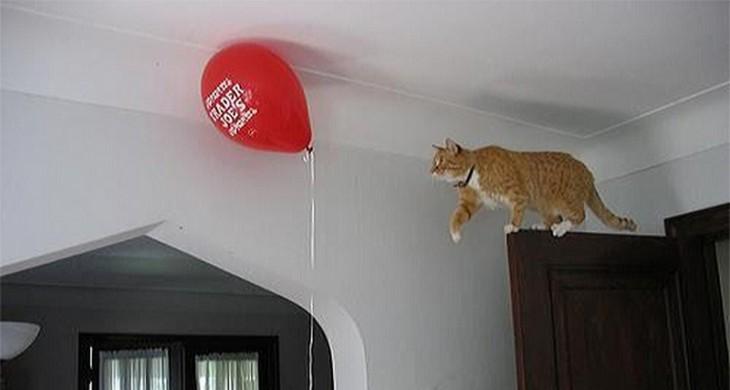 lógica de gatos