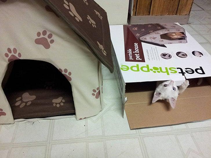 gato que duerme en la caja de lo que es su cama para gatos