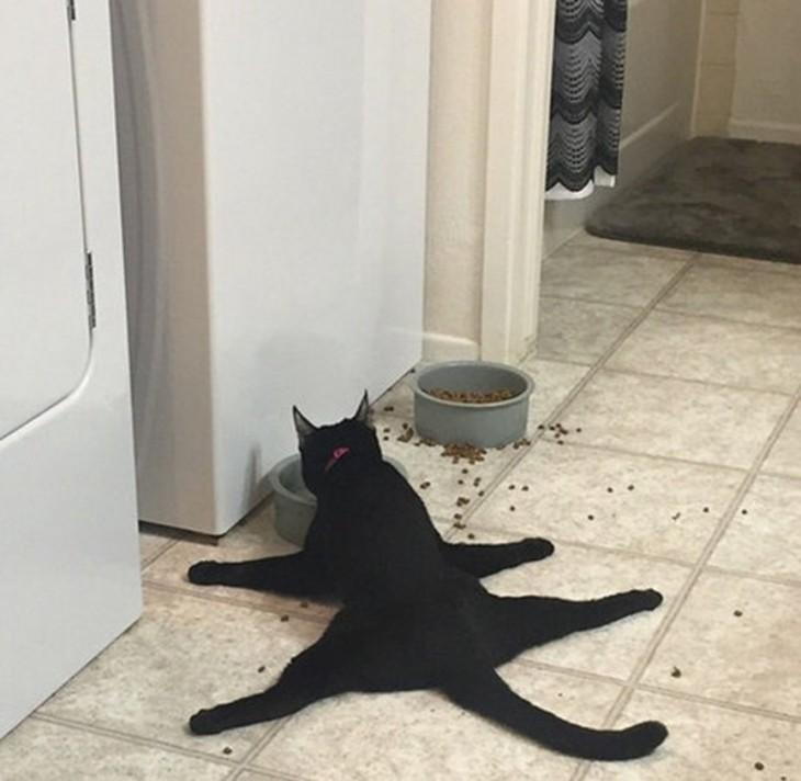la hora de cenar felina
