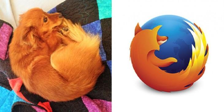 perro que parece el logo de firefox