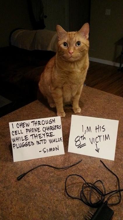 gato que destruye los cargadores de sus dueños