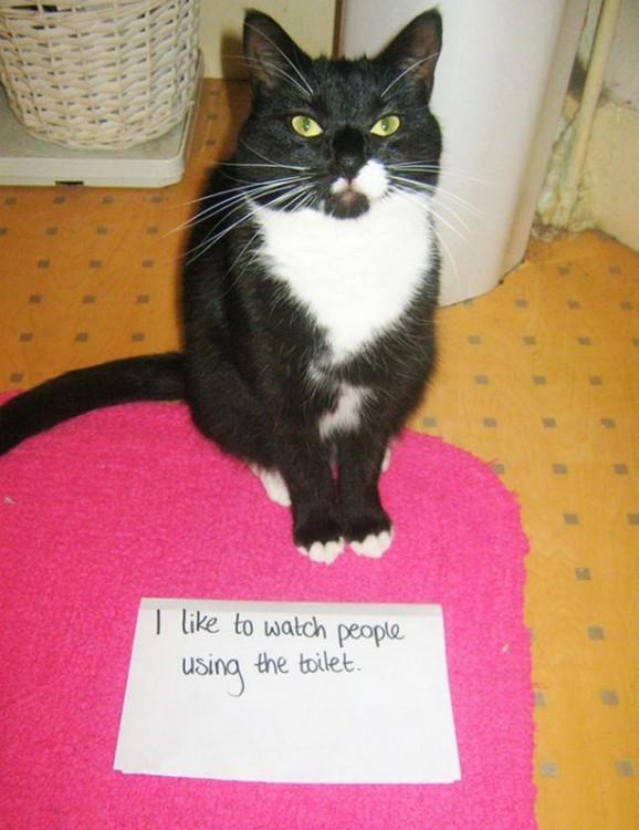 gato que le gusta ver hacer pipi a las personas en el onodoro