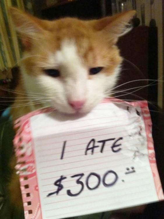 gato que se comio 300 dolares