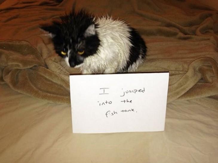 gato que se metio a la pecera