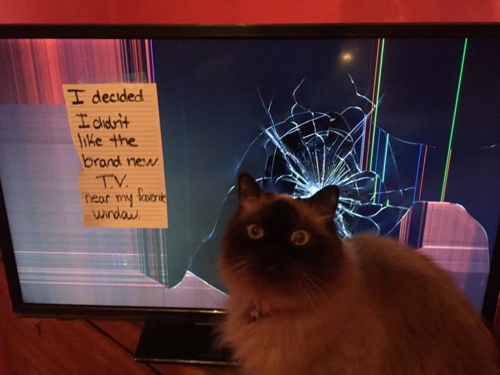 gato que rompio la pantalla