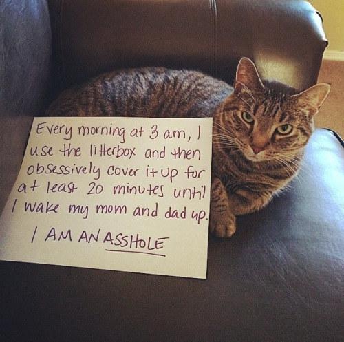 gato que hace ruido siempre a las 3 de la mañana