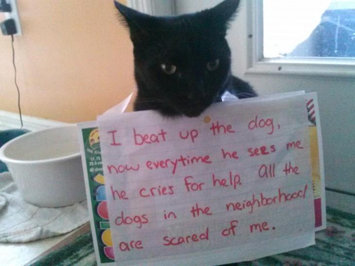 gato al que los perros le tienen miedo