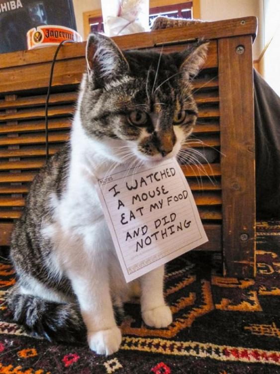 gato que deja que los ratones se coman su comida