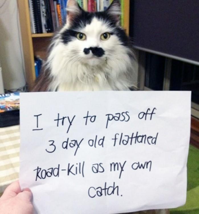 gato con cara de bigotes cuchos