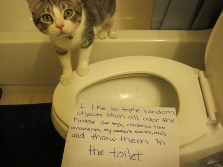gato que avienta las cosas a la taza