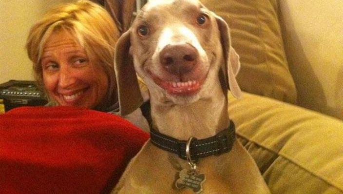 Personas que se parecen más a sus perros buscan la empatia en otras personas que en sí mismas