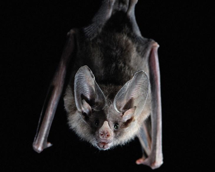 Los murciélagos no son ciegos