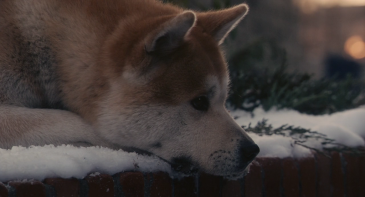Hashiko el perro más conocido en todo el mundo