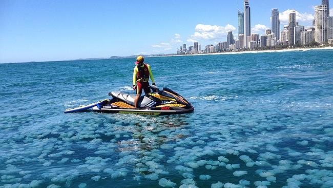 hombre rodeado de medusas dentro del mar de australia infestado de medusas debido a las mareas altas