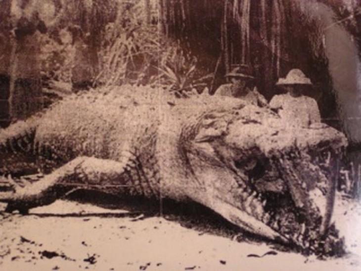 cocodrilo captura en queenland, Australia en 1957. Medía 8.7 metros