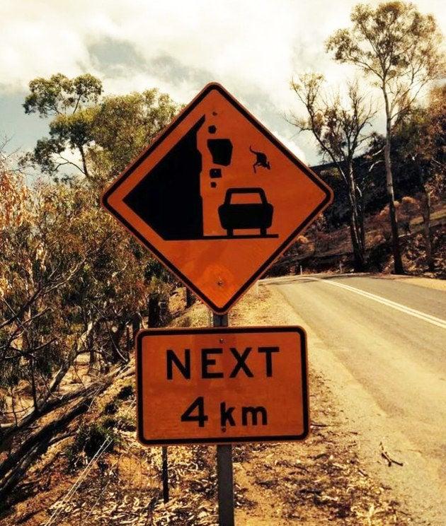 canguros pueden saltar de las montañas a media carretera