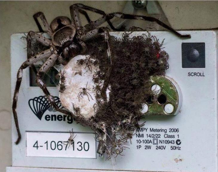 araña postrada en el sistema de electricidad