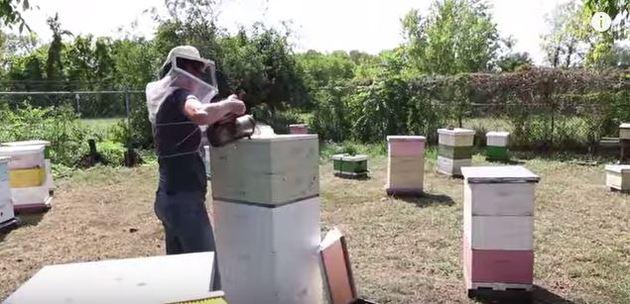 Persona haciendo miel