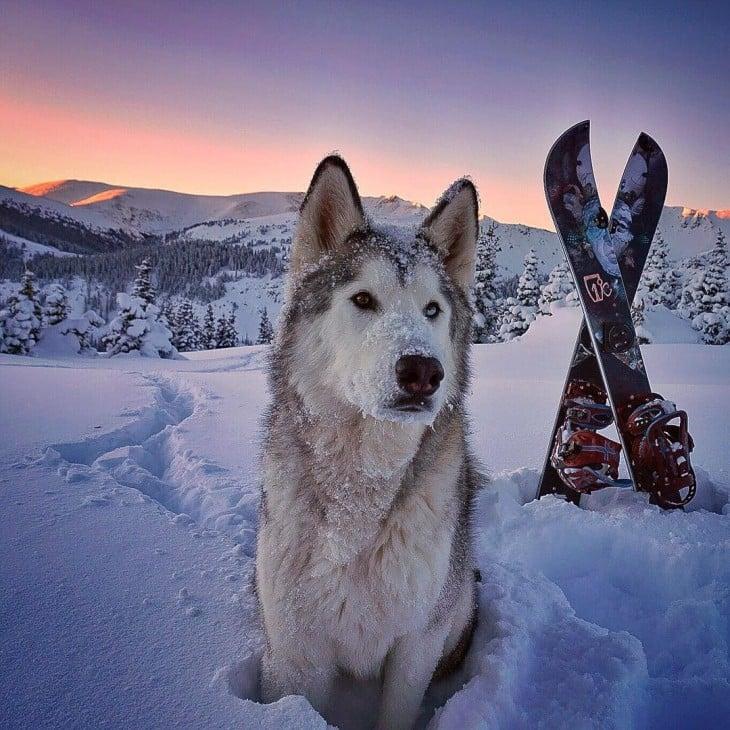 Loki el perrolobo en la nieve