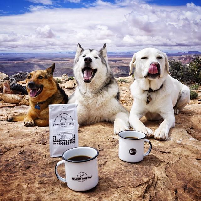 tres perros sentados en el suelo de una montaña frente a dos tazas de café