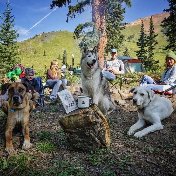 personas junto a sus perros sentados en el bosque