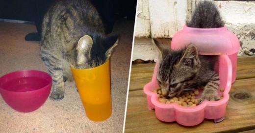 Los gatos ademas de divertidos su lógica va en contra de todo la muestra aquí
