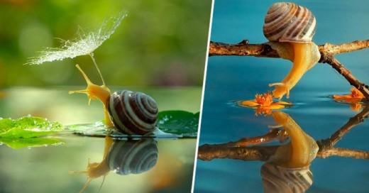 Este fotógrafo engrandece a estos pequeños caracoles con sus tomas