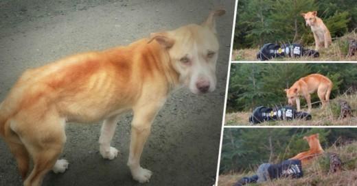 Esta Chica documenta como rescata a este perrito
