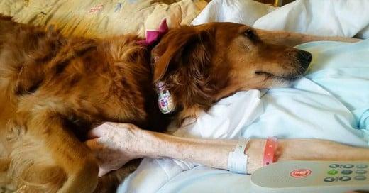 Por si solo tener un perro en tu vida ya tienes una gran terapia garantizada, estudios científicos comprueban lo saludable que es compartir con tu perro, este hospital se apoya del amigo del hombre para completar terapias y ayudar a sus pacientes a su recuperación