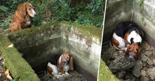 Sin duda las acciones como el compañerismo, lealtad, cariño y sentido de ayuda esta demostrado en este caso en donde una perrita estuvo a lado de su pequeña amiga hasta que fue rescatada