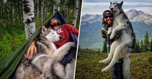 Este PerroLobo se ha convertido en el compañero perfecto de aventuras de su dueño ve como disfrutan de grandes paseos en la montaña